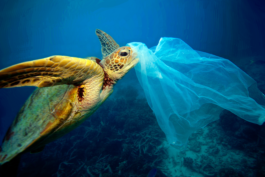 Ocean Plastic Pollution, A Global Crisis – What Can We Do?
